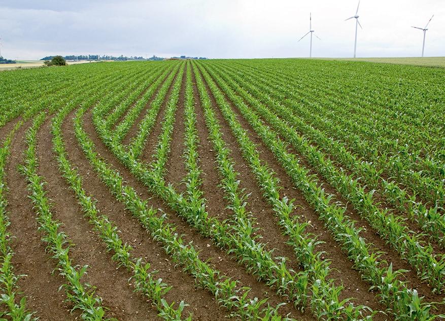 Soluciones de cultivo y cosecha AMS